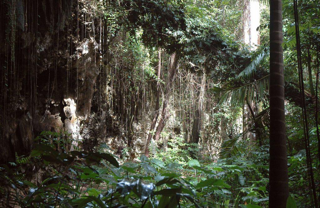 Foto eines Dschungels